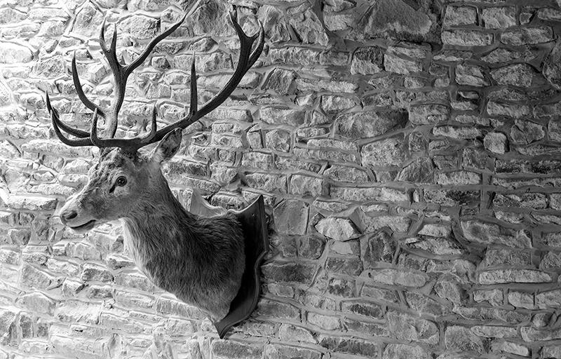 deers head,